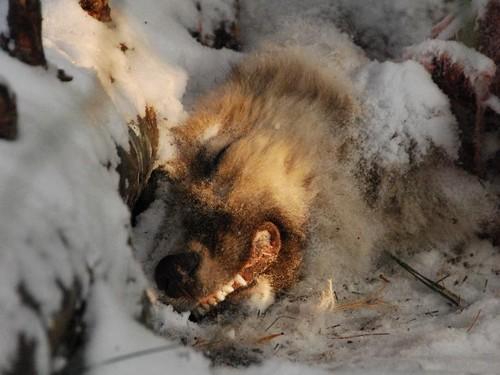 Гору собачьих трупов - находку