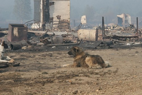 Жители поселка эвакуировались в срочном порядке. В спешке на пепелище были оставлены домашние животные