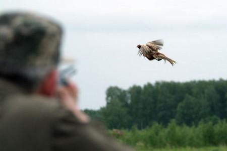 Гродненский мясокомбинат для коммерческих охотничьих туров на фазанов приобрел в аренду большой участок леса.
